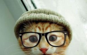 Lustige Katze mit Mütze und Brille macht Selfie