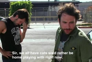cats, cool, funny, now, play, playing, quote, subtitles