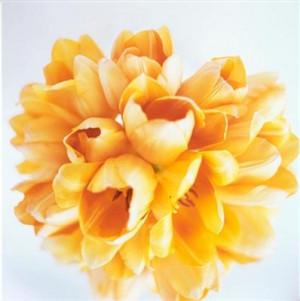 Will yellow tulips do?