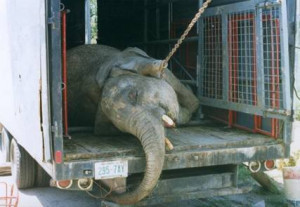 cruelty circus real people aware circuses ringling bros traveling ...