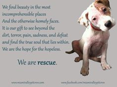 are rescue! one of MVPC's top 10 favorite quotes! And mine about dogs ...