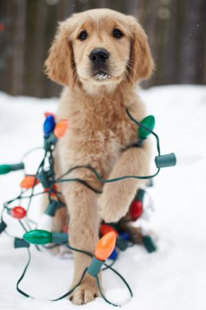 Christmas Puppy Awesomeness