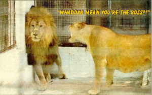 funny animal pics with words