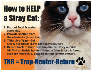 how-to-help-a-stray-cat