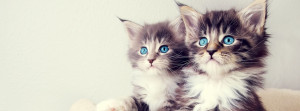 Kittens-Facebook-Cover-Photo
