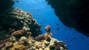 Ocean Underwater Coral Reef