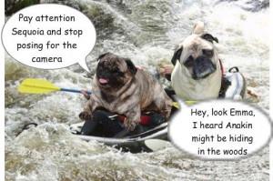 puppy wild water rafting