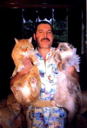 freddie mercury … ** FREDDIE MERCURY AND HIS CATS ** Freddie Mercury ...