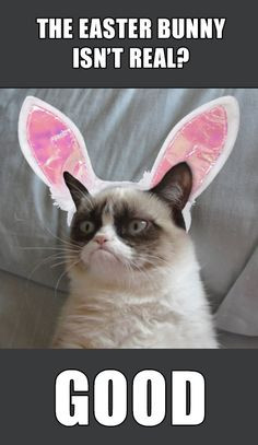 Grumpy Cat - Happy Easter More