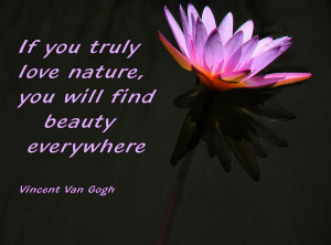 Water Lily With Quote Photograph