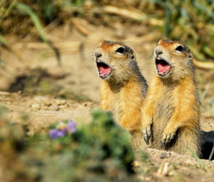 Fotos de animales graciosos