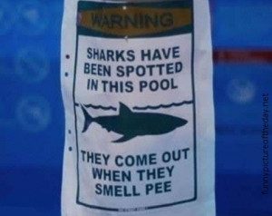 Swimming Pool Funny Sharks Spotted Sign