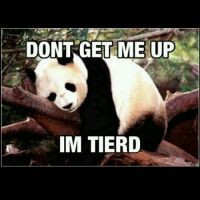panda #tired #sleep #wakeup