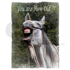 Funnies pictures about Horse Birthday Sayings