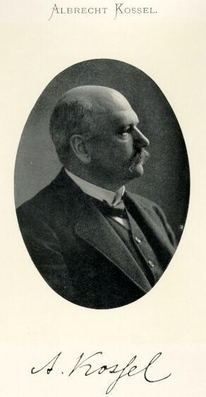 Kossel Albrecht