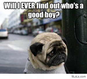 funny-memes-funny-pictures-funny-animals-quotes-funny-kids-Favim.com ...