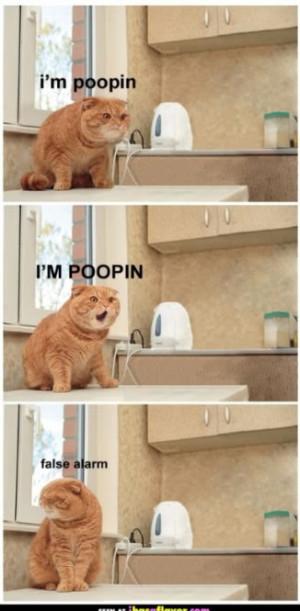 pooping cat photo funny_poop_cat.jpg
