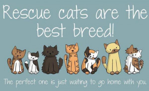 Rescue cats :)