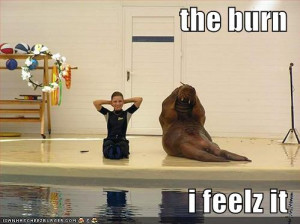 funny-pictures-aquatic-mammal-does-exercise-and-feels-the-burn
