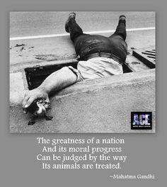 Gandhi, Baby Ducks, Animal Rescue Quotes, Inspiration Animal Quotes ...
