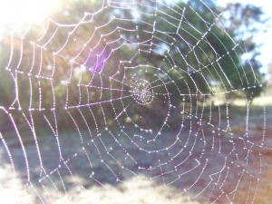 Spider webs are incredibly fragile and those little spiders work so ...
