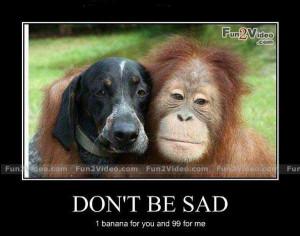 Don't be sad funny monkey and dog
