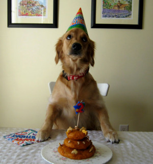 Funny dog birthday, dog birthday, colorful dog birthday