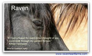 raven eye sugar neck quote
