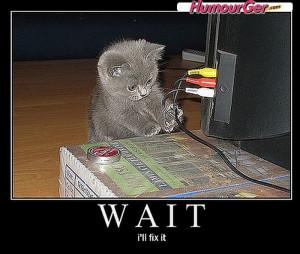 Photographie insolite drôle d'un chaton noir qui s'improvise ...