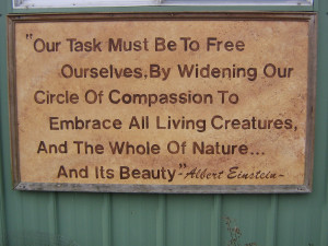 Quotes About Wildlife Conservation