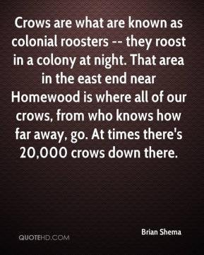 are what are known as colonial roosters -- they roost in a colony ...