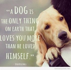 My Dog Is My Best Friend Quotes dog best friend amazing