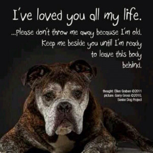 plea from an old dog pic twitter com hlcuwh2cov # dogs ...