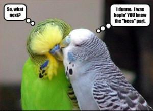 funny parrot saying photos
