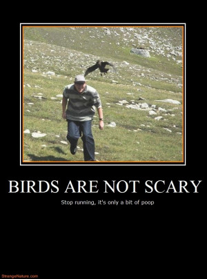 birds are not scary funny motivational animals
