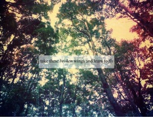 forest, lyrics, music, quotes, smile, the beatles
