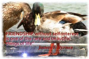 Friendship Quotes - Friendship without self-interest is one of the ...