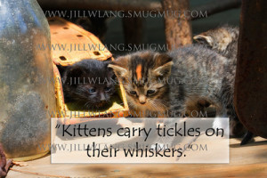 Cute KittensKittens carry tickles on their whiskers