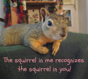 Squirrel Quotes