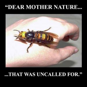 Photo Credit: themetapicture.com
