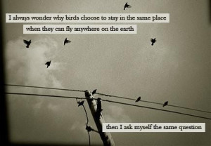 wonder why birds choose to say in the same place when they can fly ...