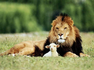 Lion showing Peace Towards Lamb | Lion and Lamb | Humanity in Animals