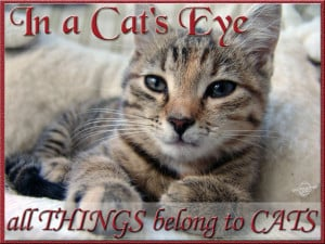 In a cat's eye, all things belong to cats