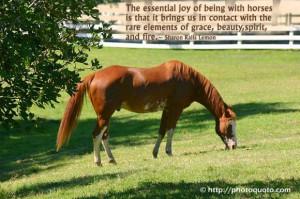 paint horse quote