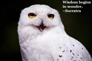 Socrates Quote on Wisdom