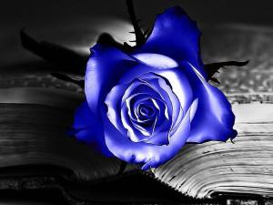 the blue rose wallpapers blue rose desktop wallpapers blue rose ...