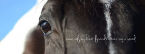 horse quotes best friend photography