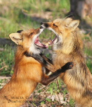 Thomas Fuller wrote With foxes we must play the fox Criminal Minds ...