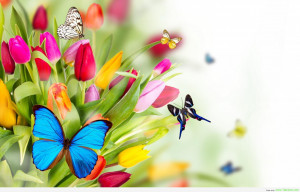for forums: [url=http://www.imagesbuddy.com/colorful-tulips-flowers ...