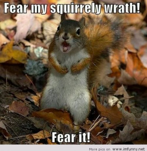 Inspirational Monday!!! Funny Animal Quotes…..heehee….cuteness